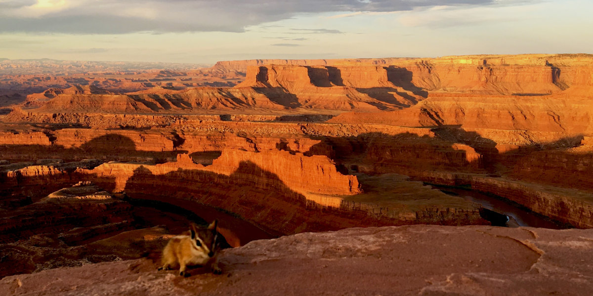 A chipmunk stands on the edge of the overlook to a large canyon