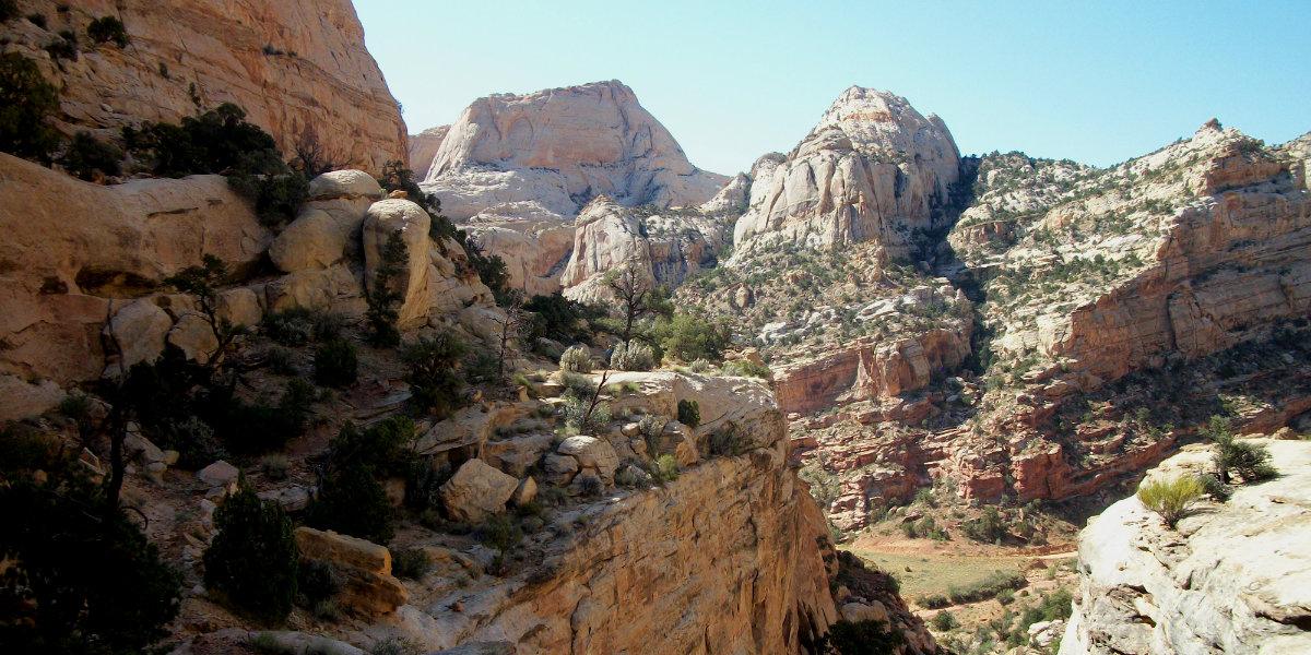 Desert canyon views with pinon pine trees