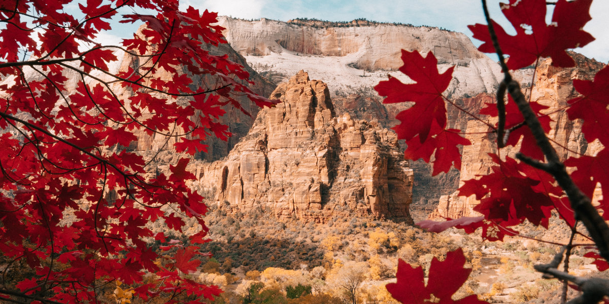 Red foliage in Zion Canyon