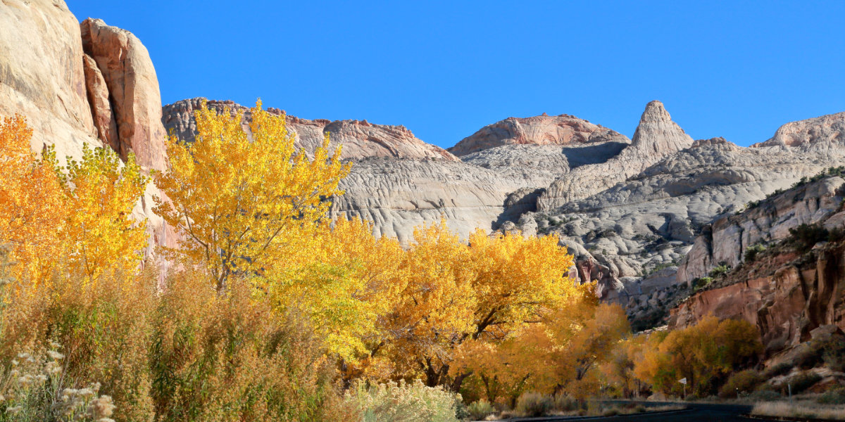 A view of fall trees near the canyon
