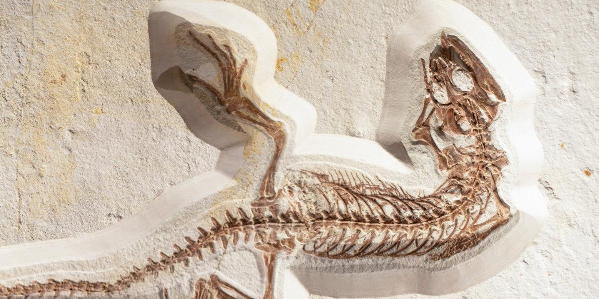Dinosaur fossils incased in sandstone