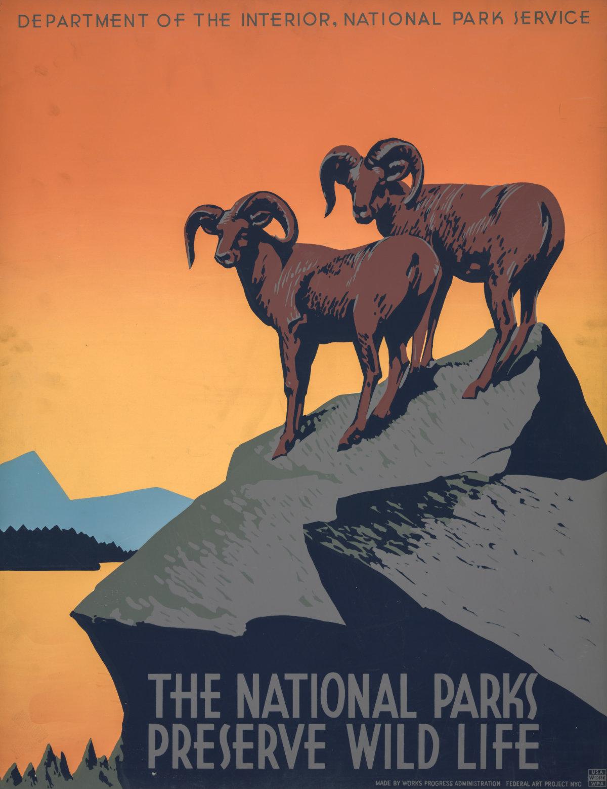 Vintage NPS poster of longhorn sheep