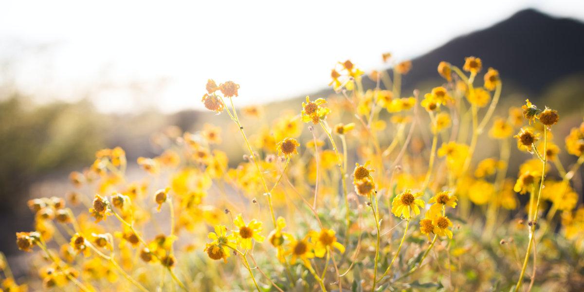 Flowers bloom in Southern Utah
